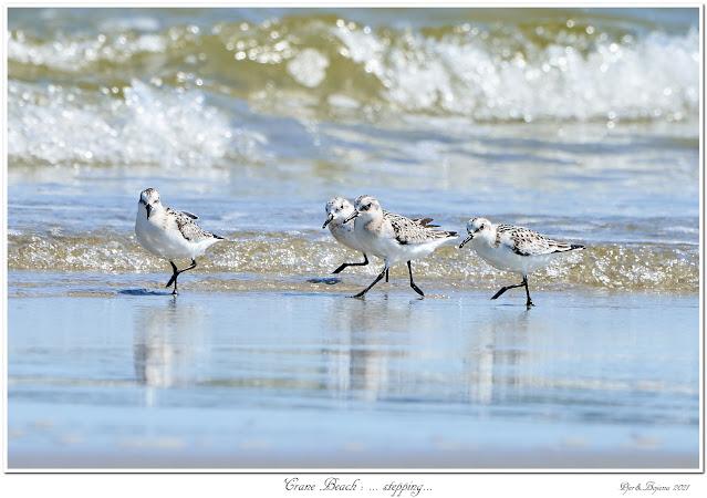 Crane Beach: ... stepping...