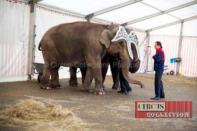 Franco Knie junior, en compagnie de deux éléphants au zoo du cirque Knie