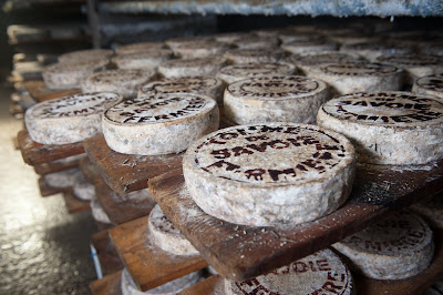 The Benefits of Cheese Making as a Business