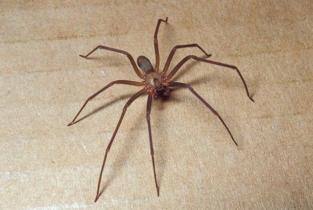 Top 10 loại côn trùng và động vật có nọc độc nguy hiểm nhất thế giới