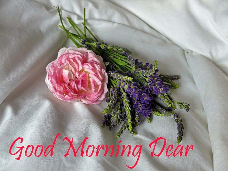 Good Morning Greetings with Lavender Flowers