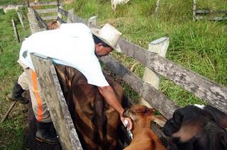 http://vnoticia.com.br/noticia/1430-vacinacao-contra-febre-aftosa-comeca-dia-1-de-maio