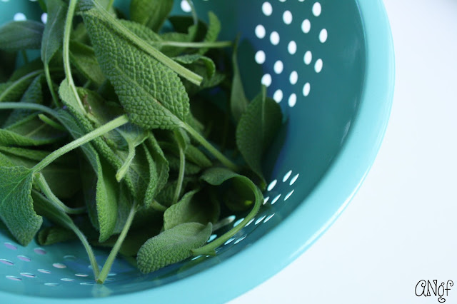 Fresh sage leaves grown in a hydroponic smart garden | Anyonita-nibbles.co.uk