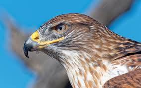 Birds Name In Hindi And English || पक्षियों के नाम हिंदी में