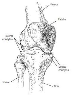 menisci of the knee joint