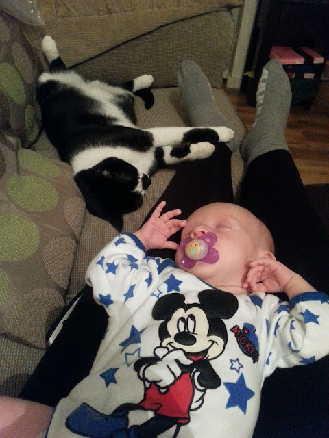 Baby lying on his mother's legs with a cat lying nearby