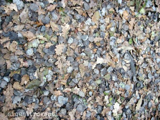 aiquattroventi-lagonidimercuraghi-foglie