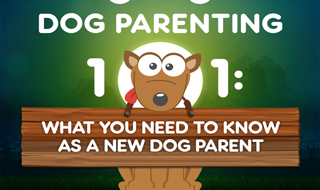 Dog Parenting 101: What You Need to Know as a New Dog Parent #infographic