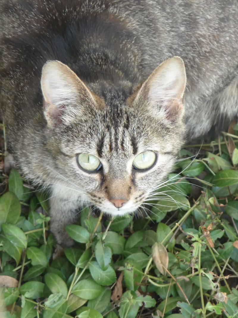 Meine grüne Wiese: Für Maus und Katz ...