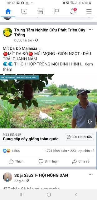 Hình ảnh Mít Da Đỏ mà chủ web LamDong.Pro chụp được khi lướt FaceBook