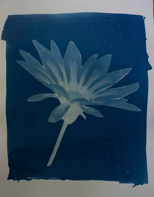 A cyanotype image of a flower and a blurb about satellites and light pollution.