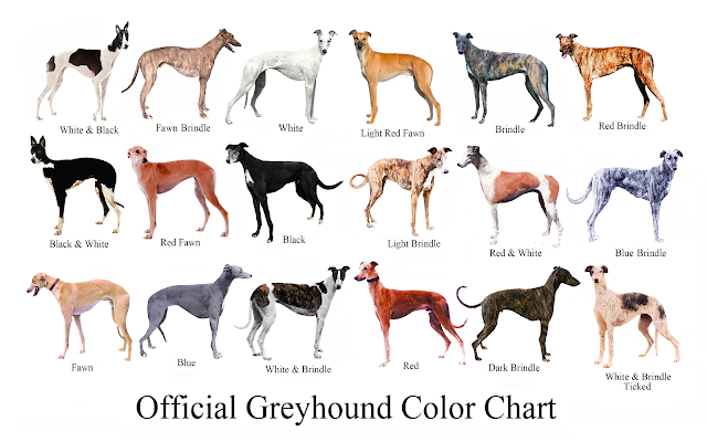 Official Greyhound Color Chart