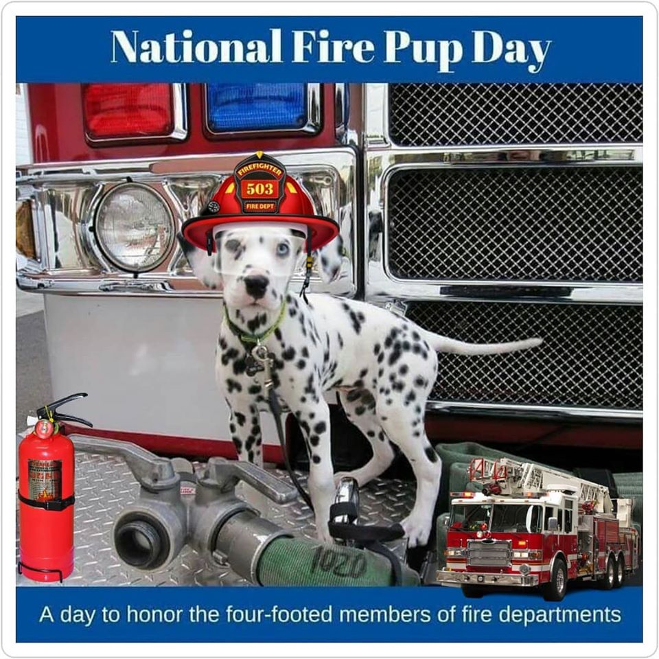 National Fire Pup Day Wishes Awesome Images, Pictures, Photos, Wallpapers