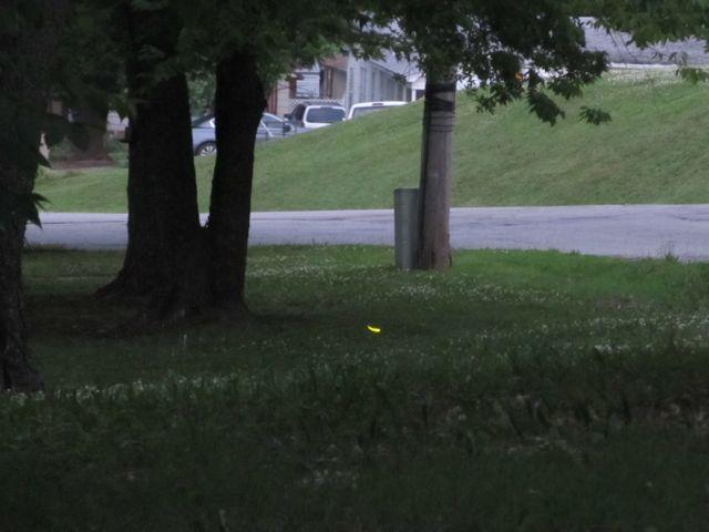 https://1.bp.blogspot.com/-Oenj6naLNd0/WUlbH867r5I/AAAAAAAAFIw/wtegkjrwE6sjoouDvpkkkkrZm-FREWp9wCLcBGAs/s640/firefliesintheyard2.jpg