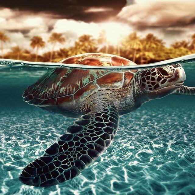 Turtle Wallpaper Engine