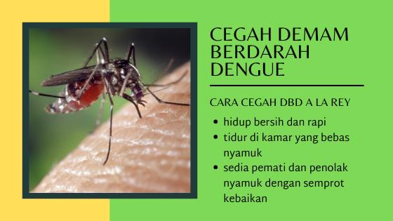 cara cegah dbd atau demam berdarah dengue