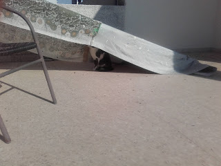 cat in den made of dustsheet and ladder