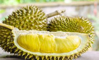 5 Khasiat dan Manfaat Buah Durian Untuk Kesehatan