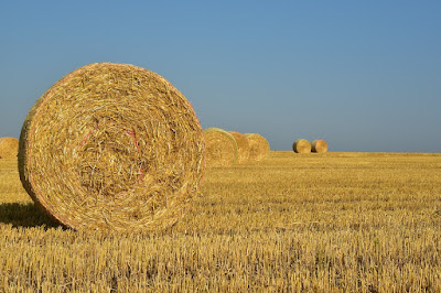 contoh pembuatan hay di luar negri