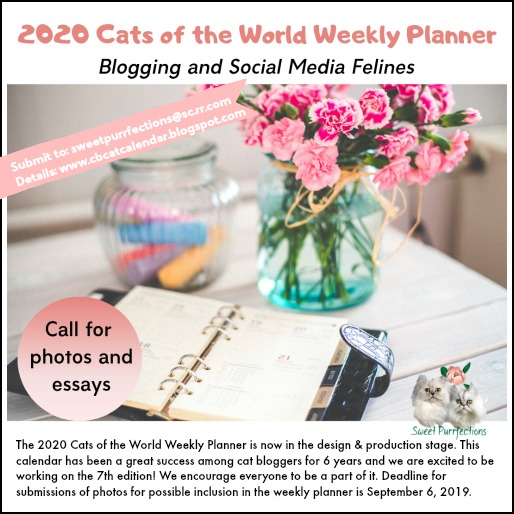 announcement and photo of weekly planner