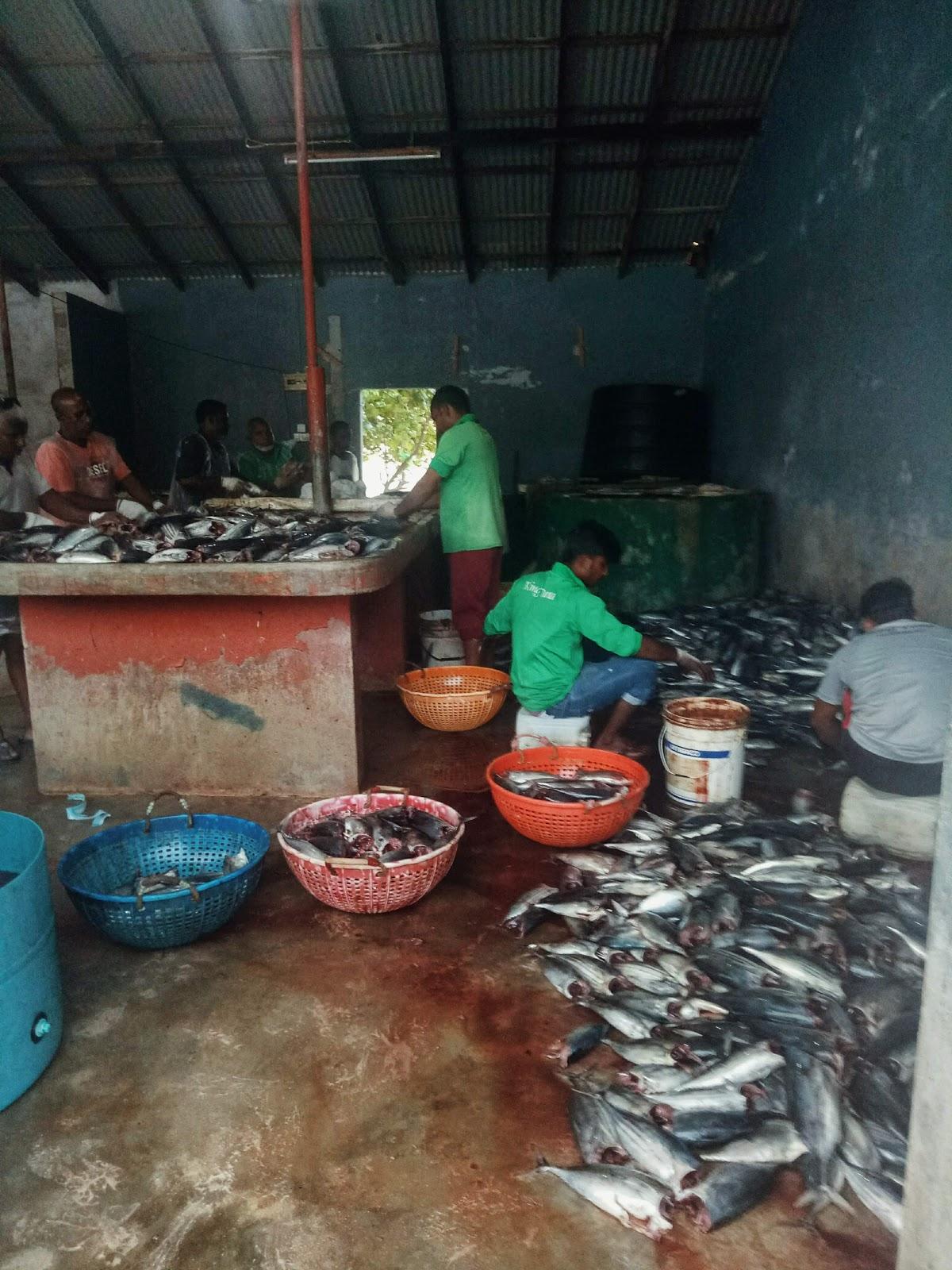Thulusdhoo fish market