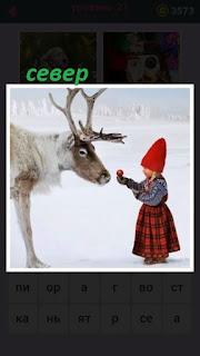 девочка в красной шапочке кормит оленя на севере