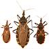 Contoh contoh arthropoda yang berperan sebagai vektor Penyakit