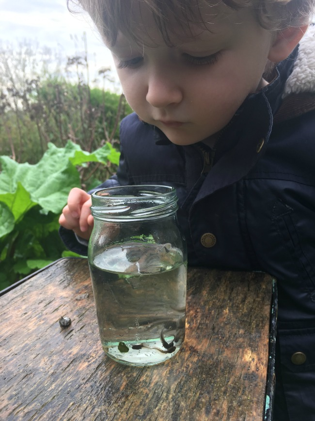 toddler-looking-at-tadpoles-in-jam-jar