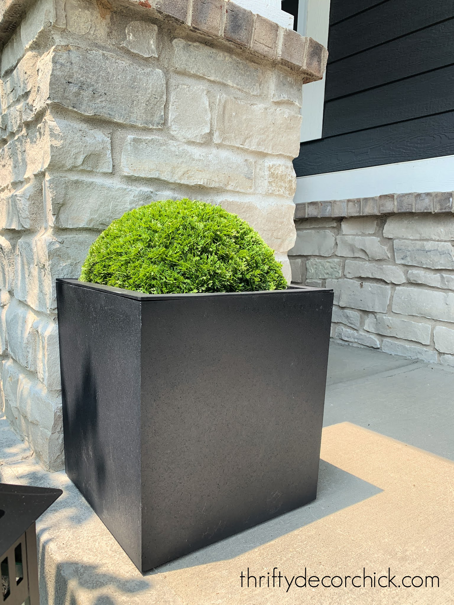 half of round topiary in planter