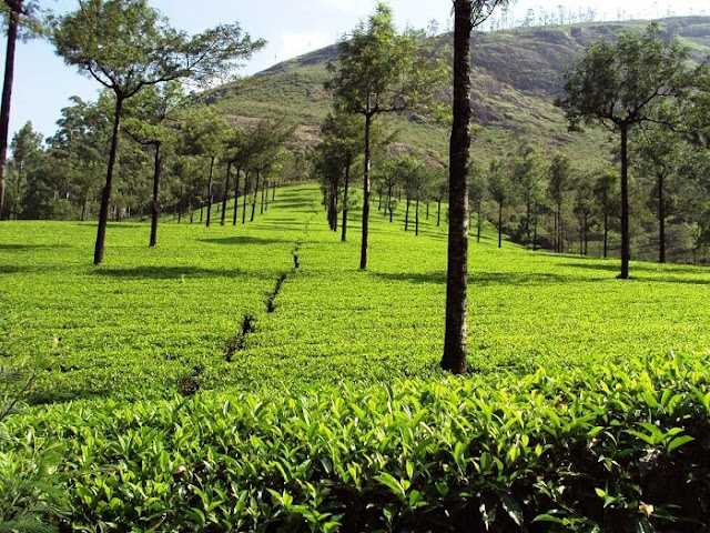 Photo Point Munnar, Best Places to Visit in Munnar