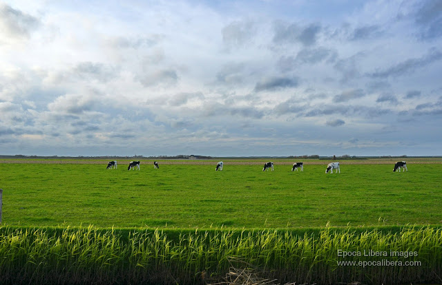 The beauty of Texel  island  continues beyond the Dunes of Texel National Park. Location near the ferry boat to Den Helder.