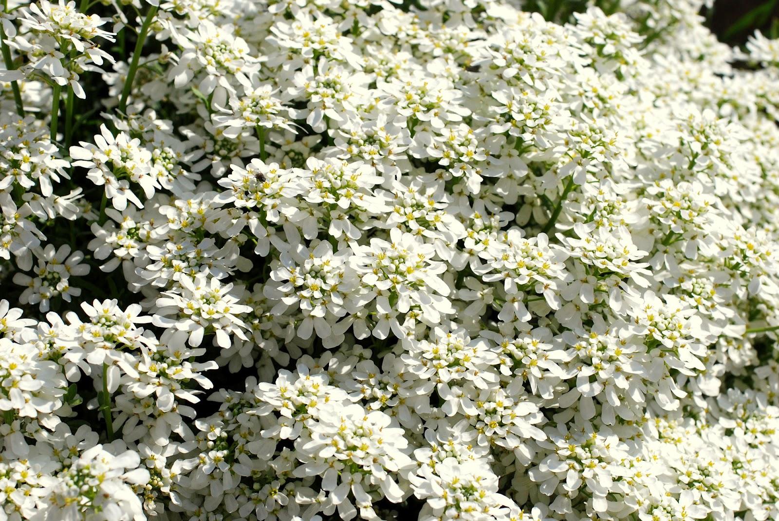 Fiori Tappezzanti Per Aiuole il mondo in un giardino: tre cuscinidi fiori!