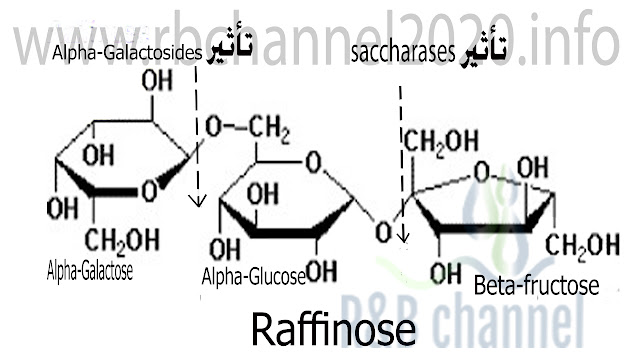 الرافينوز Raffinose