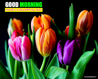good morning messages colorful tulips flowers