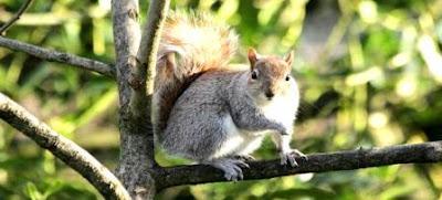Squirrels Suspected of Spreading Plague In Downtown Colorado Springs Neighborhood
