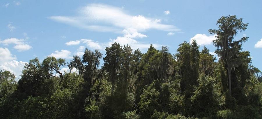Brooker Creek County Preserve