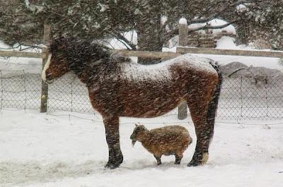 foto tierna animales