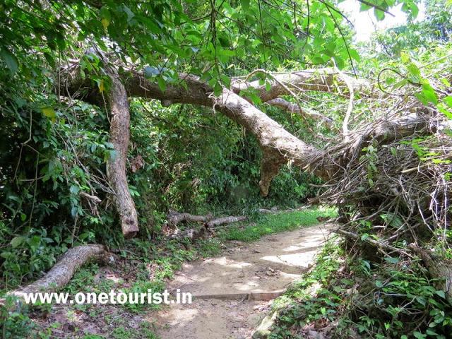 limestone caves andaman