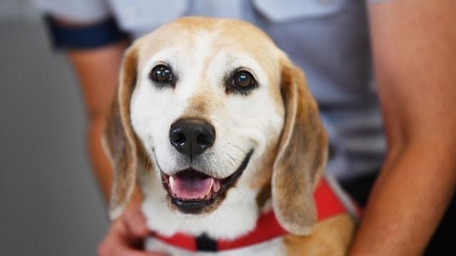 18 ερωτήσεις - απαντήσεις για το νομοσχέδιο που αφορά τα ζώα συντροφιάς