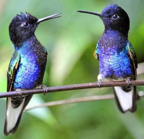 "Hummingbirds expression ""Ankhon ki gustakhiyan maaf ho!"""