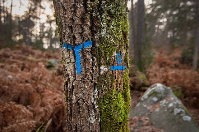 Long Boyau, Forêt de Fontainebleau.