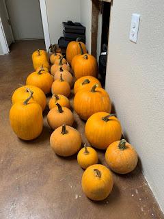 21 Pumpkins on a Floor