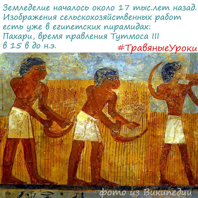 изображение поля, Древний Египет