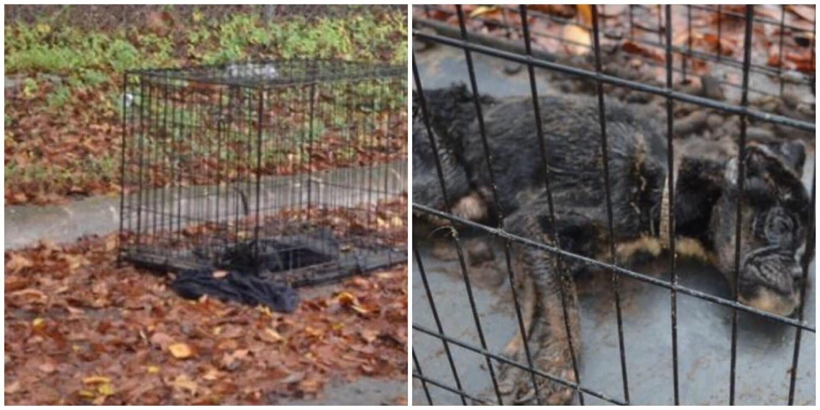 Police Get Call About Dead Dog Left In Crate  Cop Inspects