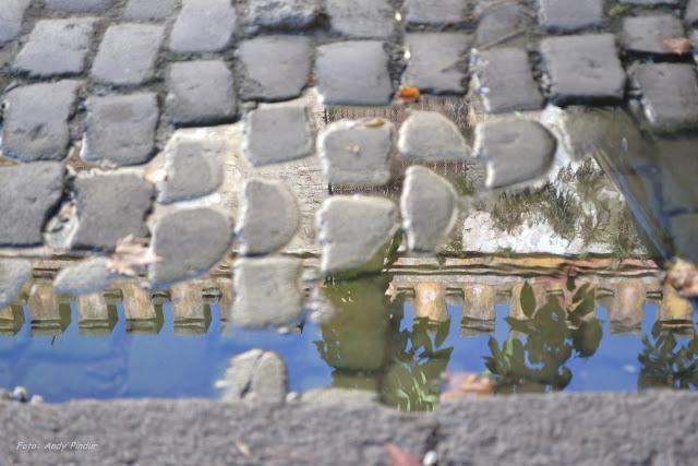 http://www.plantasatusalud.com/