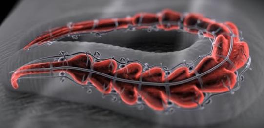 """أين تعيش دودة  العلقة الطبية اسلوب تكاثر دودة العلقة الطبية كيف تقوم دودة العلق بمص دم الإنسان المواد الطبية التي تفرزها دودة العلق اثناء مص دم الإنسان مادة Vasodilator وهذة المادة تعمل على توسيع الاوعية الدموية ليتدفق الدم بسرعة في جسد الإنسان مادة Hirudin ,وهي مادة وظيفتها تمنع تجلط الدماء  انزيم Hyaluronidase  الاستخدامات الطبية لدودة العلقة  موانع استخدام دودة العلق الطبية  وهو انزيم يساعد على زيادة نفاذية الجلد  طريقة دفاع دودة العلقة ضد الاعداء وصف دودة العلقة """" تربية دودة العلقة فوائد دودة العلقة للوجه زيت دودة العلقة اين توجد دودة العلقة اين تباع دودة العلقة في مصر, دودة العلقة للبيع, اين تباع دودة العلقة في السعودية, دودة العلقة لتكبير الذكر, hirudo medicinalis hirudo medicinalis for sale hirudo medicinalis facts hirudo medicinalis uses hirudo medicinalis classification hirudo medicinalis life cycle hirudo medicinalis diagram hirudo medicinalis pdf hirudo medicinalis taxonomy hirudo medicinalis pronunciation hirudo medicinalis anatomy hirudo medicinalis reproduction hirudo medicinalis oil hirudo medicinalis price hirudo medicinalis buy hirudo medicinalis therapy hirudo medicinalis morphology hirudo medicinalis medicinal use hirudo medicinalis leech hirudo medicinalis and the plastic surgeon hirudo medicinalis fda hirudo medicinalis adalah hirudo medicinalis adaptations hirudo medicinalis artinya arti hirudo medicinalis hirudo medicinalis bacteria hirudo medicinalis benefits hirudo medicinalis breeding buy hirudo medicinalis leeches blutegel hirudo medicinalis bite hirudo medicinalis hirudo medicinalis bestellen blutegel hirudo medicinalis kaufen hirudo medicinalis common name hirudo medicinalis care hirudo medicinalis characteristics hirudo medicinalis caracteristicas hirudo medicinalis cream hirudo medicinalis class hirudo medicinalis cites hirudo medicinalis ciri ciri hirudo medicinalis control centrul hirudo medicinalis piatra neamt hirudo medicinalis c30 hirudo medicinalis code hirudo medicinalis comprar hirudo medicinalis crème hirudo medicinalis cena """