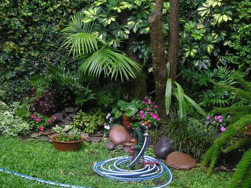 Plantas y flores plantas especies 10 plantas de sombra for Jardines pequenos con plantas de sombra
