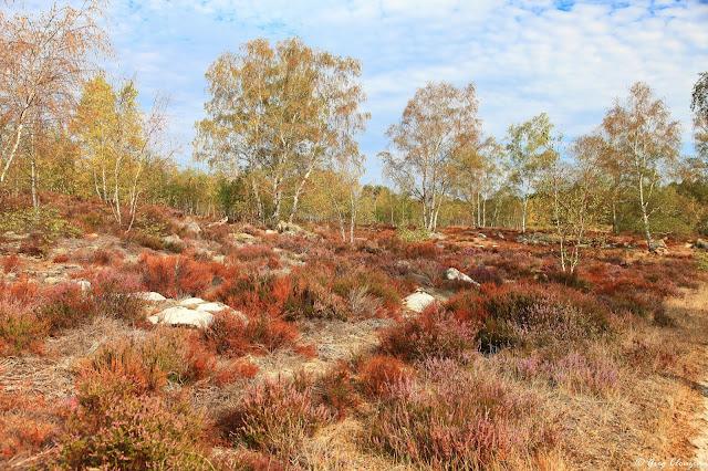 Avec le réchauffement climatique, la flore qui couvre des sols est de plus en plus fragile