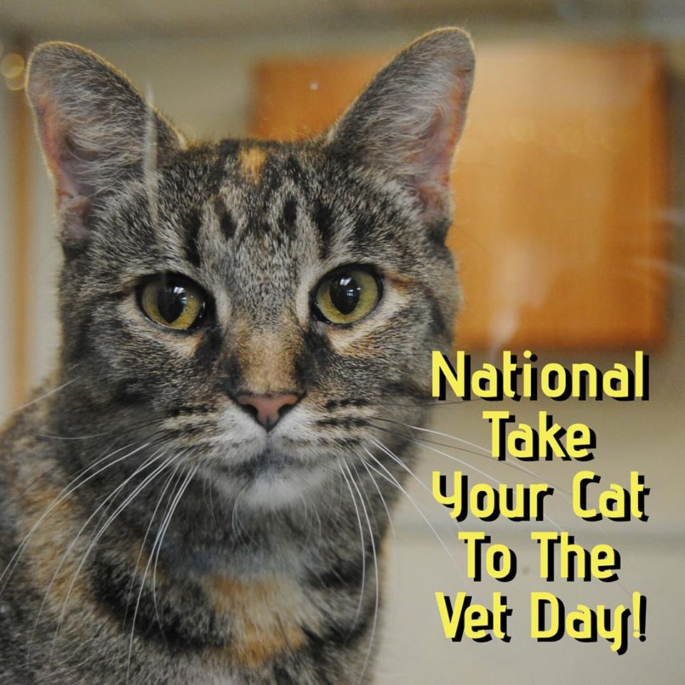 National Take Your Cat to the Vet Day