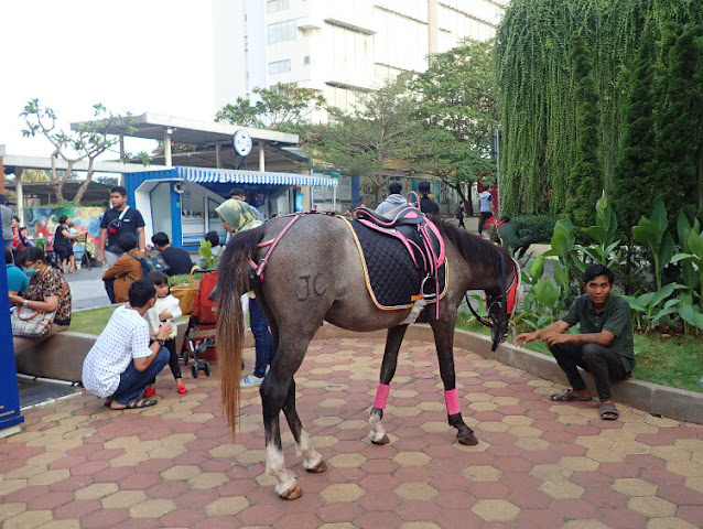 Pony Horse Riding
